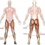 4 Lower Body Exercises You Are Not Doing